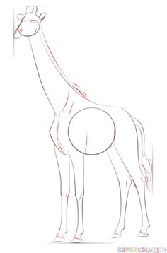 How to draw a realistic giraffe | Step by step Drawing ...