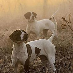 Love these hunting dogs
