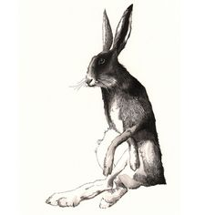 wise old hare