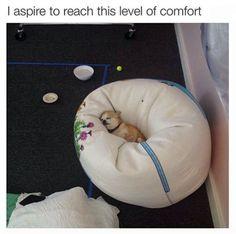 Cute Chihuahua Sleeping On a Giant Puff