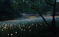 Et si votre jardin était recouvert par des milliers de lumières scintillantes ? C'est à cela que s'emploie Bruno, un expert en lumières, qui habille les jardins de magnifiques parures de lumières. Des installations poétiques que l'on pourrait croire sorti...