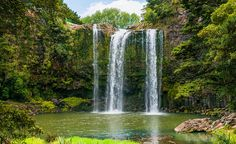 Whangarei Falls on New Zealand's North Island.
