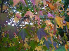 Colours of Autumn - Autumn leaves