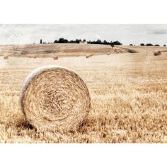End of summer, Landscape photography, Rustic Farmhouse, Harvest,... ($17) ❤ liked on Polyvore