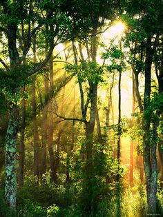 Sunbeams Through the Trees Photographic Print at AllPosters.com