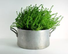 French pot planter. I dig.