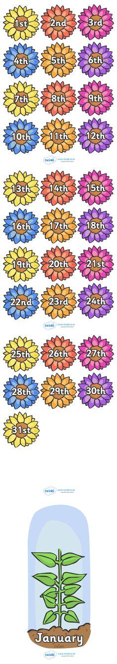 Twinkl Resources >> Flower Calendar >> Classroom printables for Pre-School, Kindergarten, Primary School and beyond! flowers, calendar, days, months, colour, themed