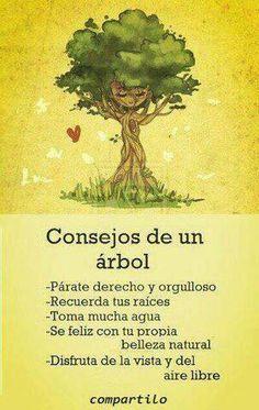 Consejos de un árbol