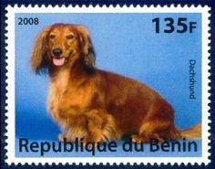dachshund stamps | Dachshund Dog Postage Stamp Benin 2008 Mint NH