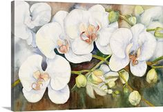 Joanne Porter Solid-Faced Canvas Print Wall Art Print entitled Stem Of Orchids Canvas Art Prints, Canvas Wall Art, Framed Prints, Framed Canvas, Big Canvas, Orchid Drawing, Orchids Painting, White Orchids, Artist Canvas