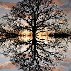 Enchanted sunset tree - Mirror image