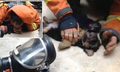 Spanish fireman brings a puppy back to life with mouth to mouth