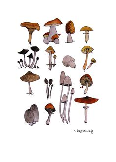 "Hello and welcome to Frankie & Pearl Mushrooms A4 8.5x11inches Original Artwork,Wild Mushroom Collection, Forest Flora Lovers Perfect Gift in Scandinavian, Nordic Style. Flora Lovers Gift. Housewarming, Kitchen Hanging. THE STORY ""It's the simple things in life that provide us with a sense of perspective and expand the soul. Nothing is mundane. If we look hard enough there is poetry in every action, an element of drama in every situation, in every scenario. I try to reflect t..."