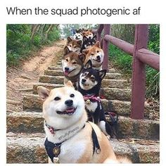 When these dogs became #SquadGoals. | 26 Animal Posts That Will Honestly Just Make You Feel Good