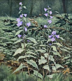 Campanula, original oil on canvas by Lewis Bryden | R. Michelson Galleries