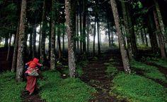 Floresta no Butão.