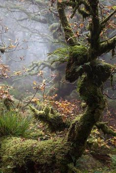 This photo smells good This photo smells goodYou can find Tree trunks and more on our website.This photo smells good This photo smells good Magical Tree, Magical Forest, Tree Forest, Beautiful World, Beautiful Places, Forest Bathing, Parcs, Fantasy Landscape, Nature Pictures
