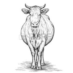 Image result for cow  line art