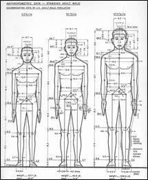Child Body Dimensions
