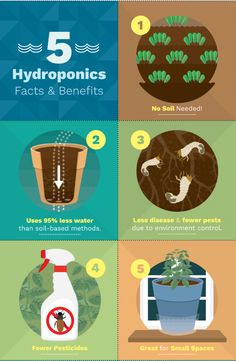 Hydroponics Gardening Facts and benefits of growing vegetables inside using hydroponics - There are many benefits to growing food and plants with hydroponic systems. Learn how and why your plants should be growing their roots in water instead of soil. Hydroponic Farming, Hydroponic Growing, Hydroponics System, Backyard Aquaponics, Hydroponic Vegetables, Indoor Hydroponics, Hydroponic Plants, Diy Hydroponik, Indoor Vegetable Gardening