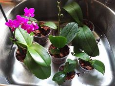 Time for Orchid Bath Time with some friends