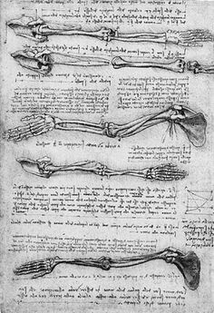 Below is a collection of sketches by Leonardo Da Vinci, he is known as one of the greatest painters of all time. His sketches of anatomy are astonishing and simply the peak of sketching perfection. Anatomy Study, Body Anatomy, Anatomy Art, Anatomy Reference, Human Anatomy, Anatomy Sketches, Anatomy Drawing, Leonardo Da Vinci Dibujos, Da Vinci Inventions