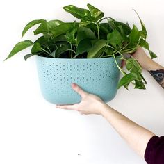 How to Install a Wally Eco (Spa) Vertical Garden Wall Planter - Project Garden Diy Garden Wall Planter, Vertical Garden Wall, Gravel Garden, Lawn And Garden, Eco Garden, Growing Gardens, Growing Plants, Beth Chatto, Endangered Plants