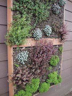 """green wall"" planters"