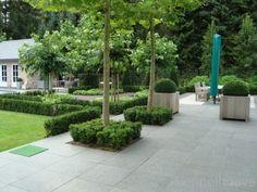 Formele tuin, terras van graniet tegels, Dakplataan en Buxus in blokvorm