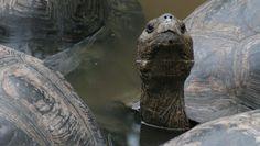 a tortoise---mnm.com