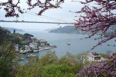 http://www.fotokritik.com/252905/erguvan-sehri-istanbul      ISTANBUL