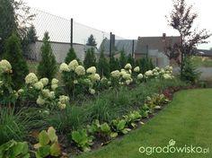 Ogród w Puszczykowie - strona 92 - Forum ogrodnicze - Ogrodowisko