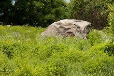 Split Rock in the Native Plant Garden