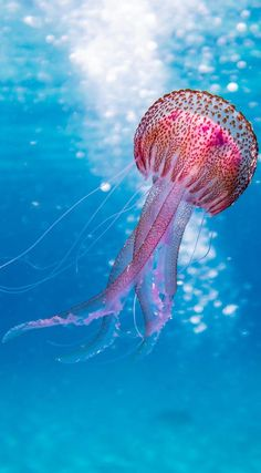 Picture of a beautiful jellyfish Picture of a beautiful jellyfish.You can find Ocean creatures and more on our website.Picture of a beautiful jellyfish Picture of. Beautiful Sea Creatures, Animals Beautiful, Cute Animals, Wild Animals, Beautiful Images Of Nature, Beautiful Ocean Pictures, Deep Sea Animals, Under The Sea Animals, Ocean Photos
