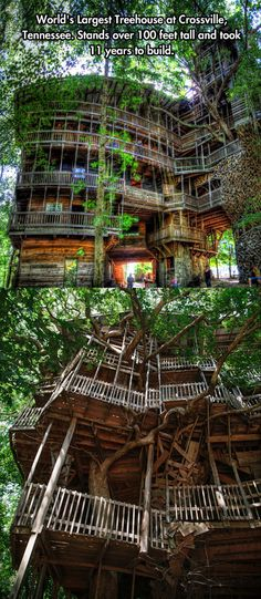 cool-largest-tree-house-Tennessee NEED TO GO HERE!