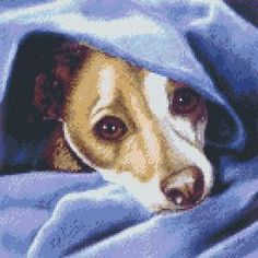 Cross Stitch Chart Jack Russell Terrier Dog Cold? Me? £9.95