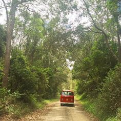 Looking for an unforgettable Noosa experience? Jump in the car and take a Noosa Country Drive and experience some of the best that Noosa has to offer including nature, food, culture and village life. Farm Gate, Bike Trails, Spa Day, Lush, Country Roads, Explore, Nature, Instagram Posts, Car
