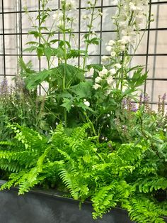 Garden Requisites' galvanised steel trough planters can come with in-built trellis Galvanized Trough, Metal Trough, Trough Planters, Metal Planters, Galvanized Metal, Garden Planters, Metal Trellis, Garden Trellis, Seaside Garden