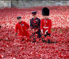 Poppys at the Tower of London.