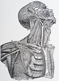 I really wish I'd not sold my Gray's Anatomy when I left art school. Damn!