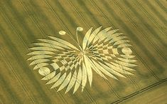 Crop Circle Butterfly