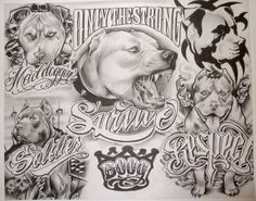 pitbull tattoo sketch - Google'da Ara