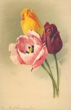 Tulips ~ gold, purple, and pink ~ by Catherine Klein Catherine Klein, Art Vintage, Vintage Cards, Vintage Images, Victorian Flowers, Vintage Flowers, Vintage Floral, Art Floral, Watercolor Flowers