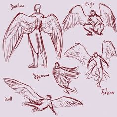 Wings, body positions; How to Draw Manga/Anime