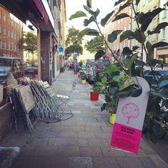 Bäume zu verschenken @deinviertel hat für Euch diesen Morgen  ein besondere Überraschung vorbereitet. In der Reichenbachstrasse sind Bäumchen  aller Art  zum Mitnehmen aufgestellt. Einfach vorbeikommen Bäumchen ein neues Zuhause auf Terrasse oder im Garten geben und sich freuen  #baum #tree #trees #deinvierteldeinbaum #deinvierteldeineleinwand #reichebachstrasse #gärtnerplatz  #gifttree #munich #muenchen #trees #plantatree #baumpflanzen #verschönerdiewelt #verschönerdiestadt