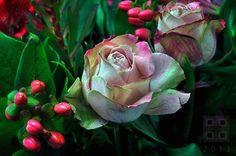 Roses Compagnon