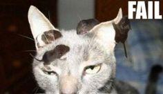 Görüp görebileceğiniz en şapşik 15 kedi