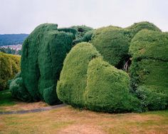 California Topiaries by Marc Alcock #inspiration #photography