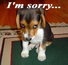 dog_sorry