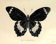 Resultado de imagem para tatuagens borboleta preta